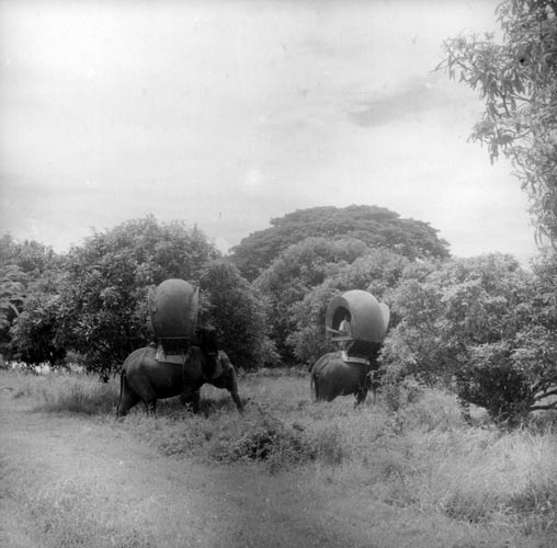 Old Photo of Elephant with howdahs in Cambodia