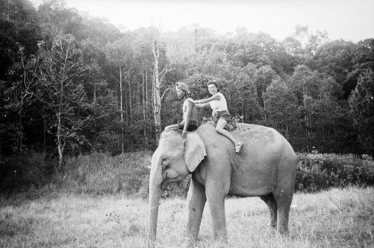 Old Photo of Elephant in Cambodia