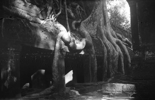 Ta Prohm Temple Old Photo