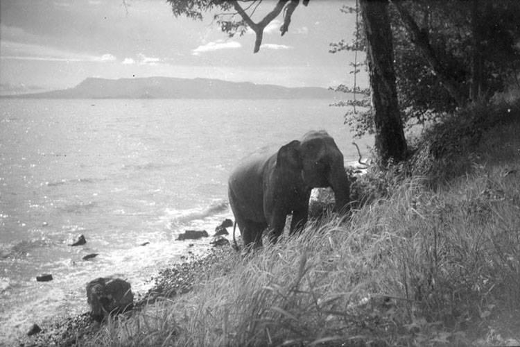 Elephant in Cambodia