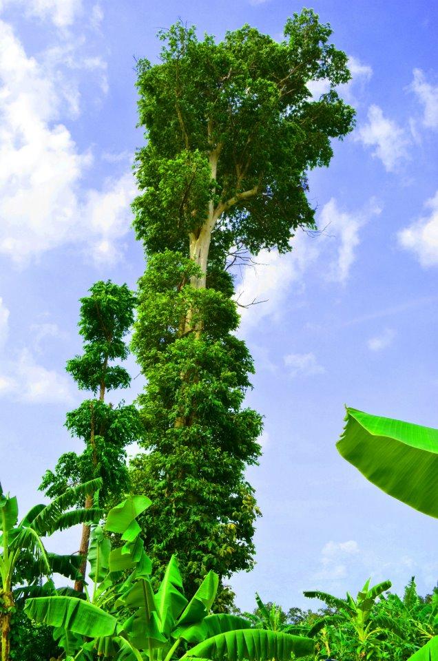 Exotic Tree