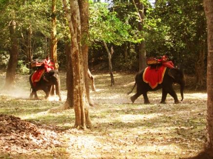 Elephant Trekking