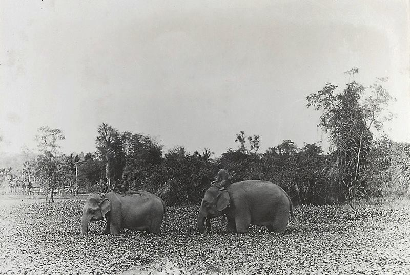 Old Photo of Elephant near angkor
