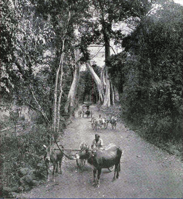 Old Photo of Cambodia, 1912
