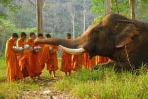 Elephants Cambodia
