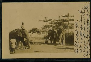 Cambodian elephants (Year 1903).